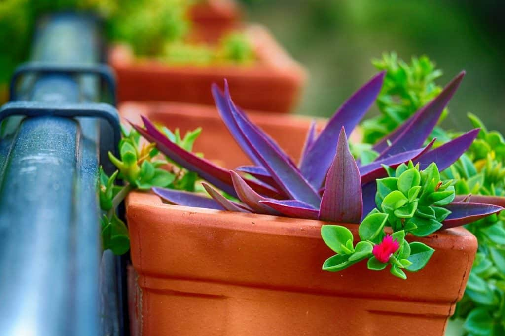 what is balcony gardening