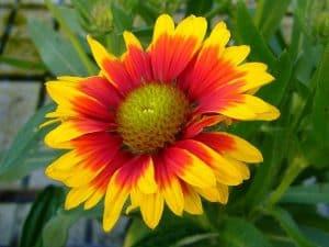 best plants for sunny balcony garden