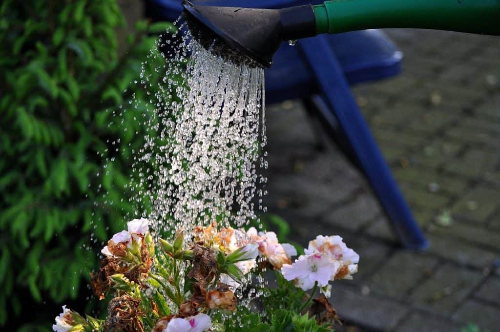 How much water does a plant need per day