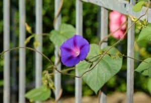 Best flower plants for balcony garden