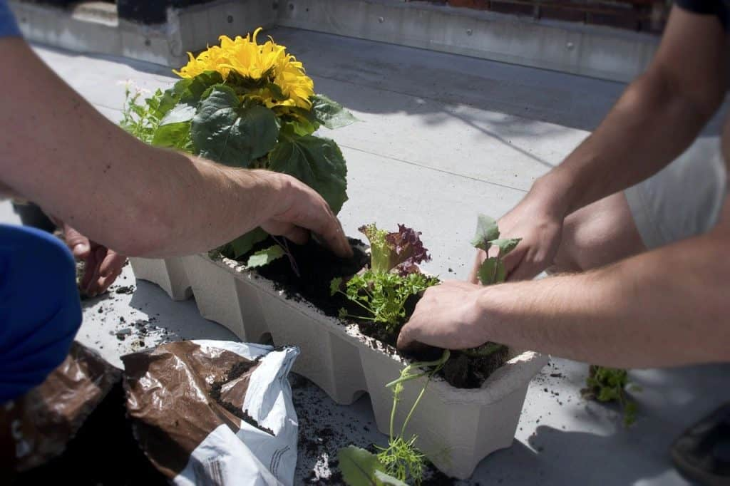 Things to consider while set up a Balcony Garden
