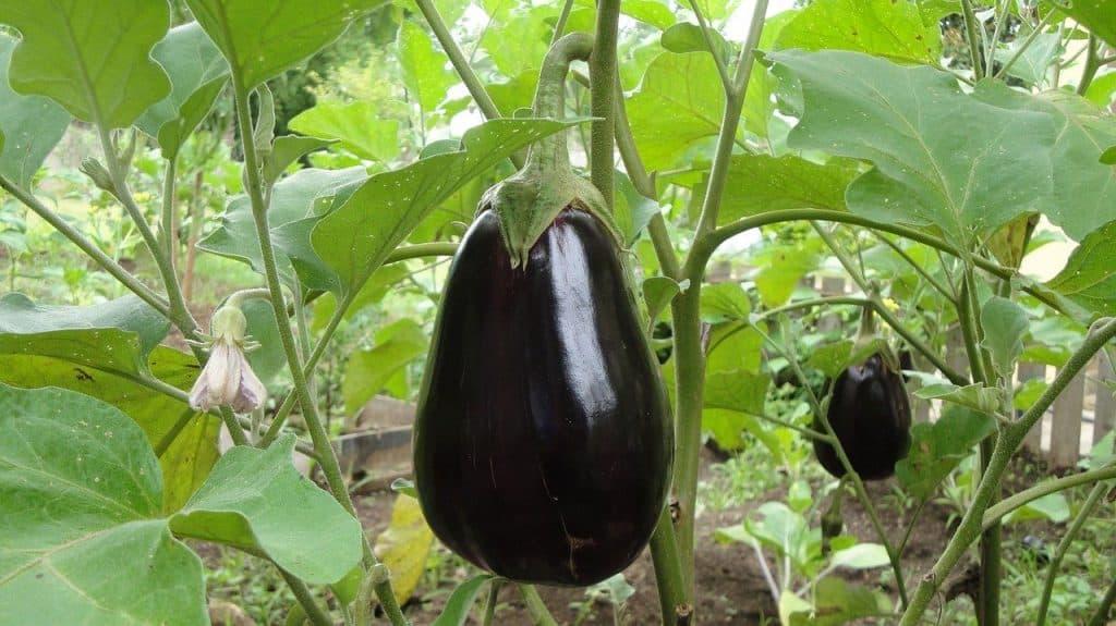 best vegetables for balcony garden