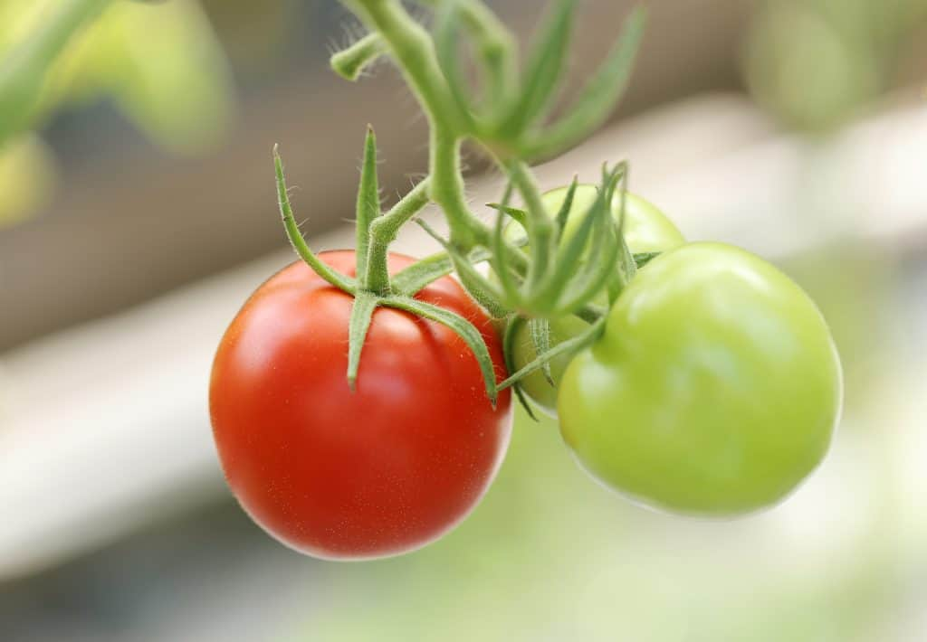 best vegetables for balcony garden tomatoes