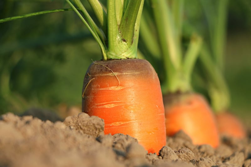 vegetables that can grow in balcony carrot