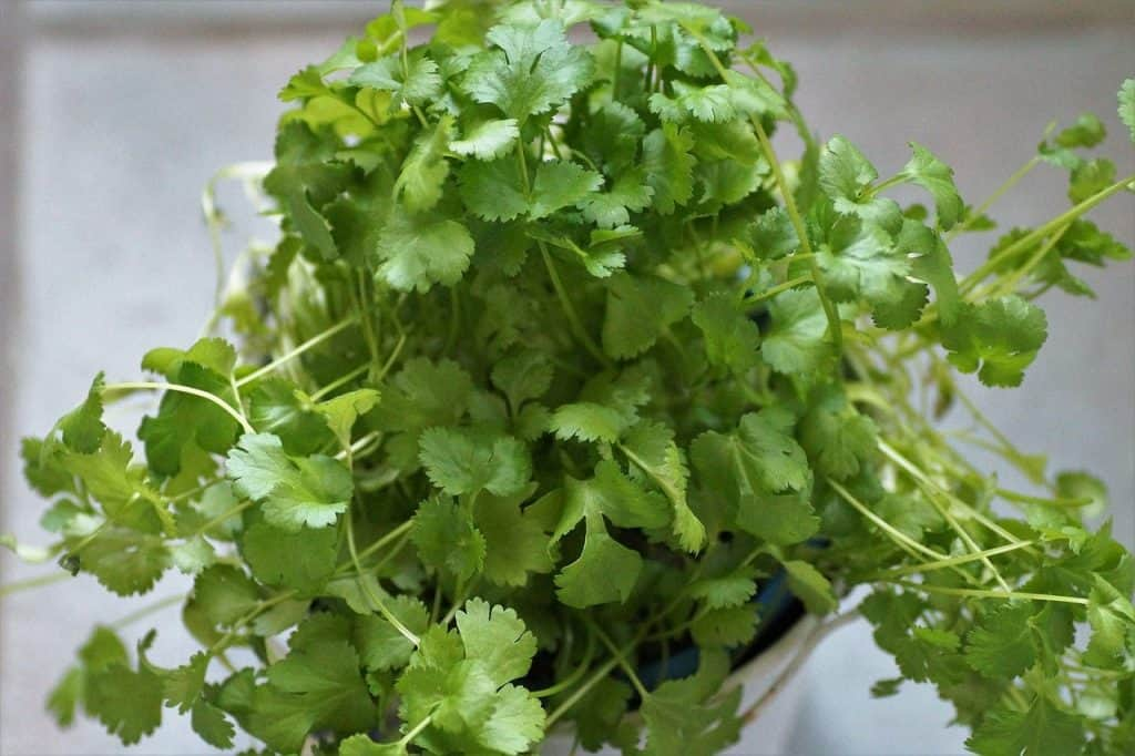 vegetables you can grow on a balcony 1