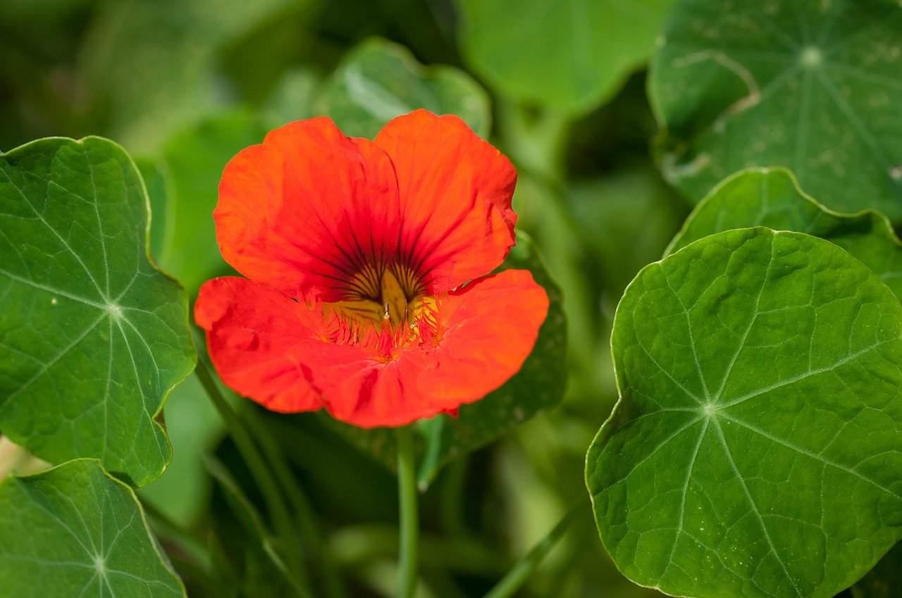 Best Flowers that grow well in summer in Balcony Garden