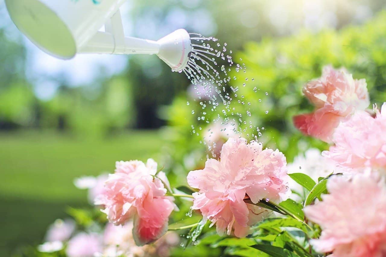 What type of water makes plants grow faster