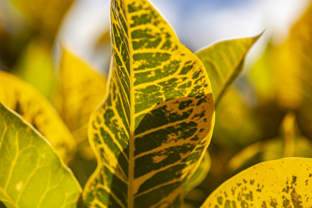 Should you cut off yellow leaves