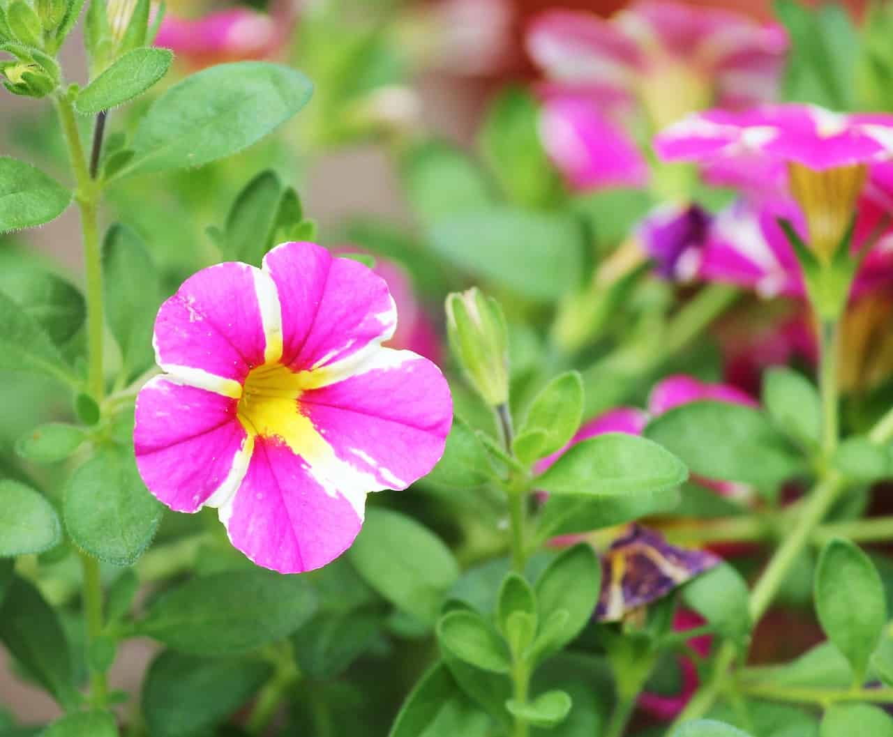 Balcony Gardening Tips for Summer