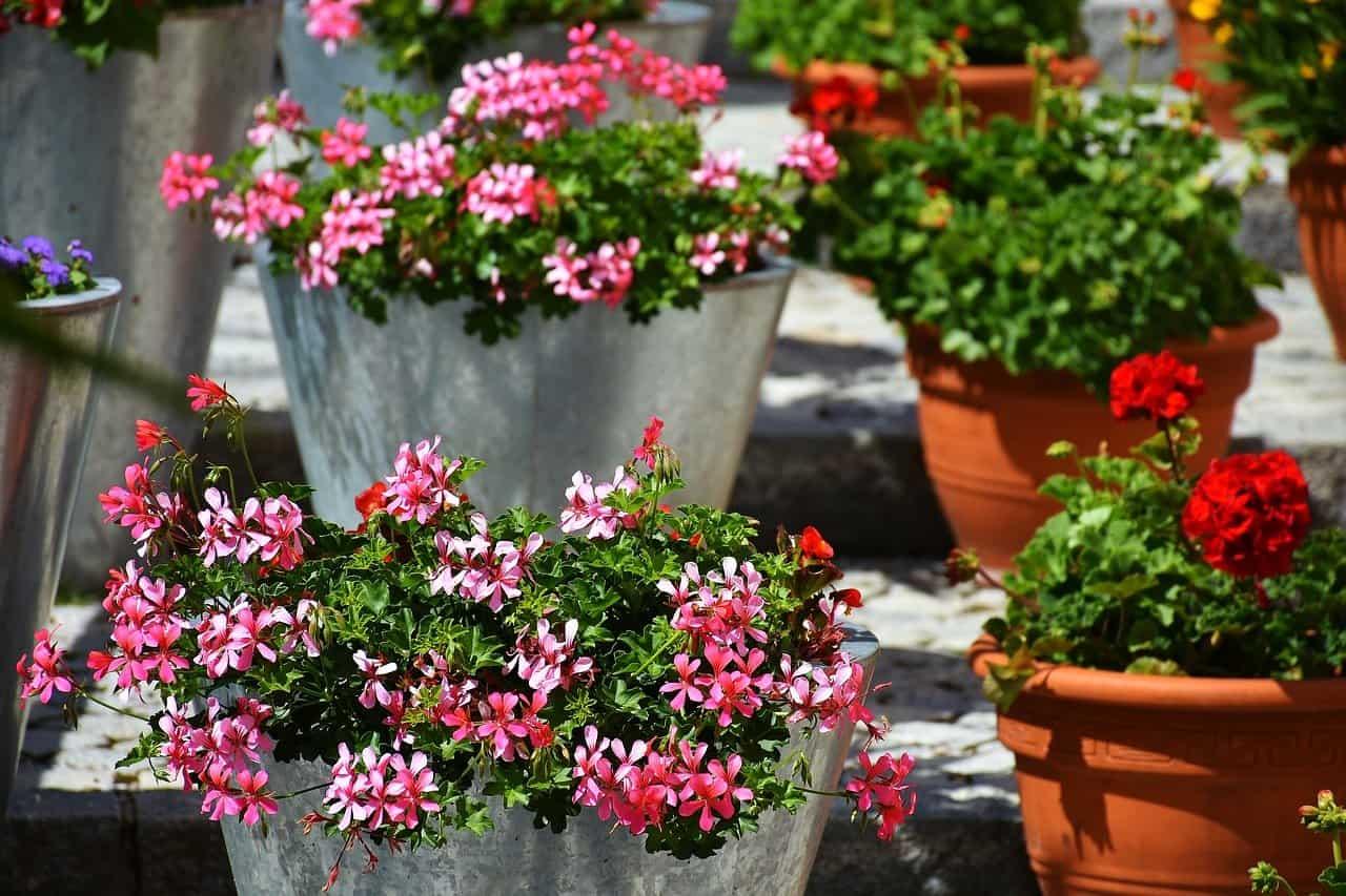 balcony gardening tips for beginners