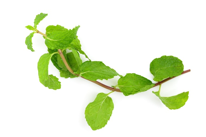 can you grow mint from cuttings
