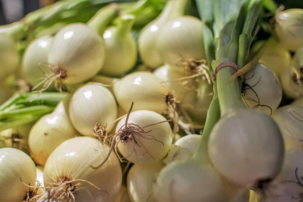 How to Grow Garlic on Balcony Garden