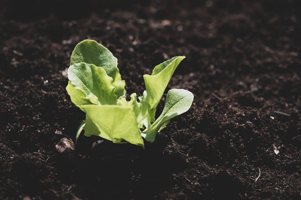 start a small vegetable garden