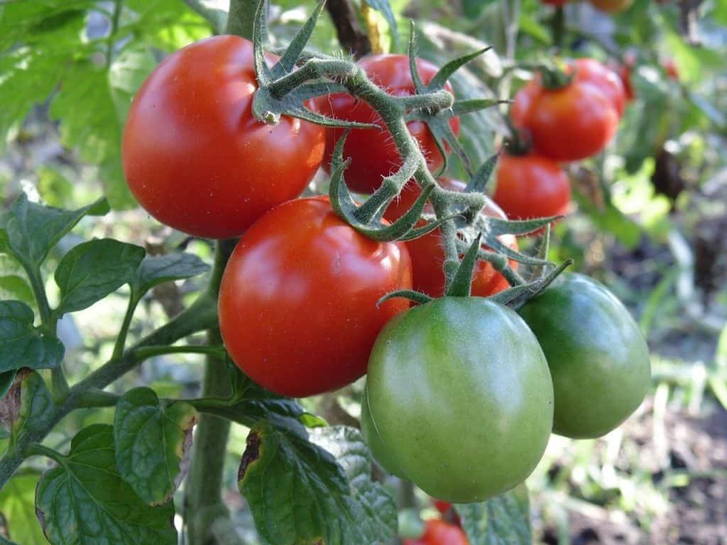 start a small vegetable garden in my balcony