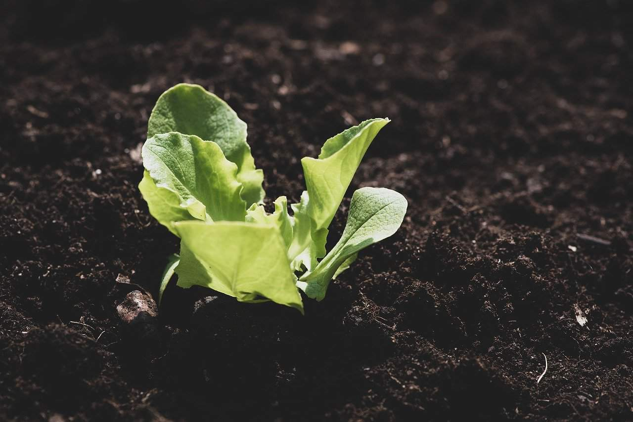 How to start a small vegetable garden in my balcony
