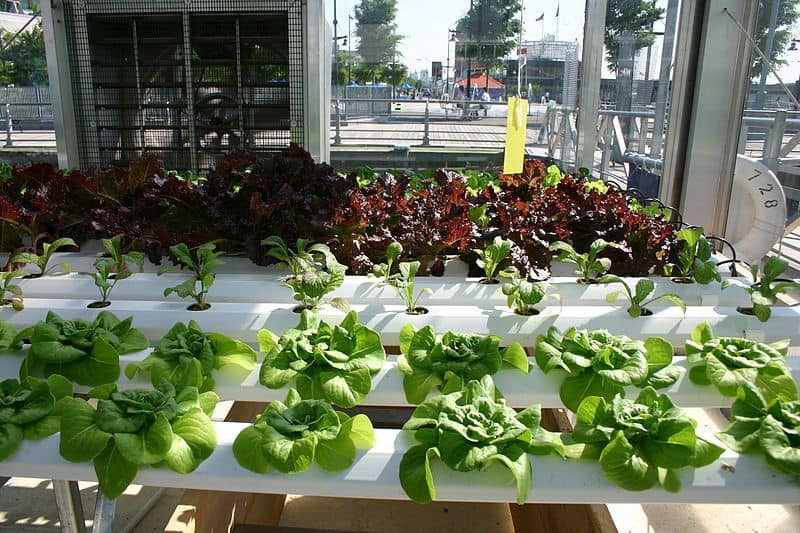 How to do hydroponic gardening