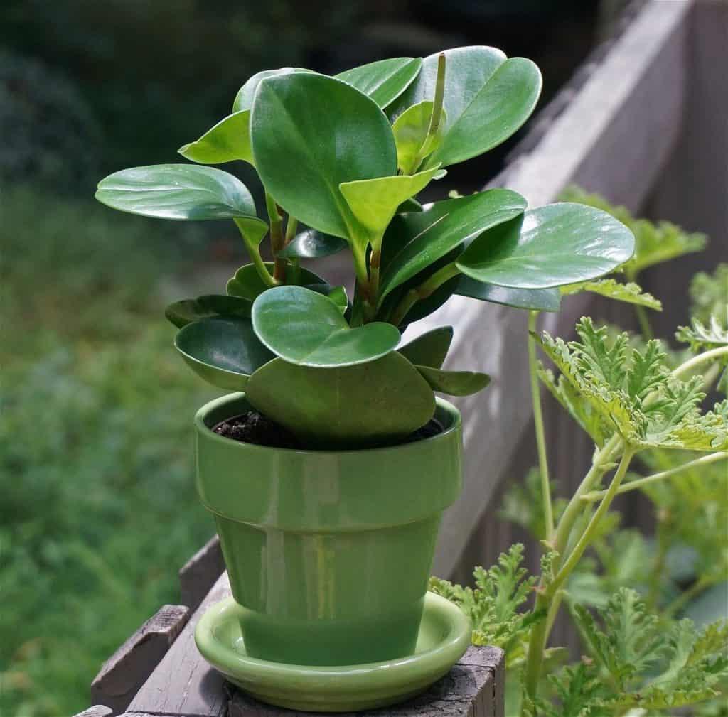 Indoor plants for bedroom