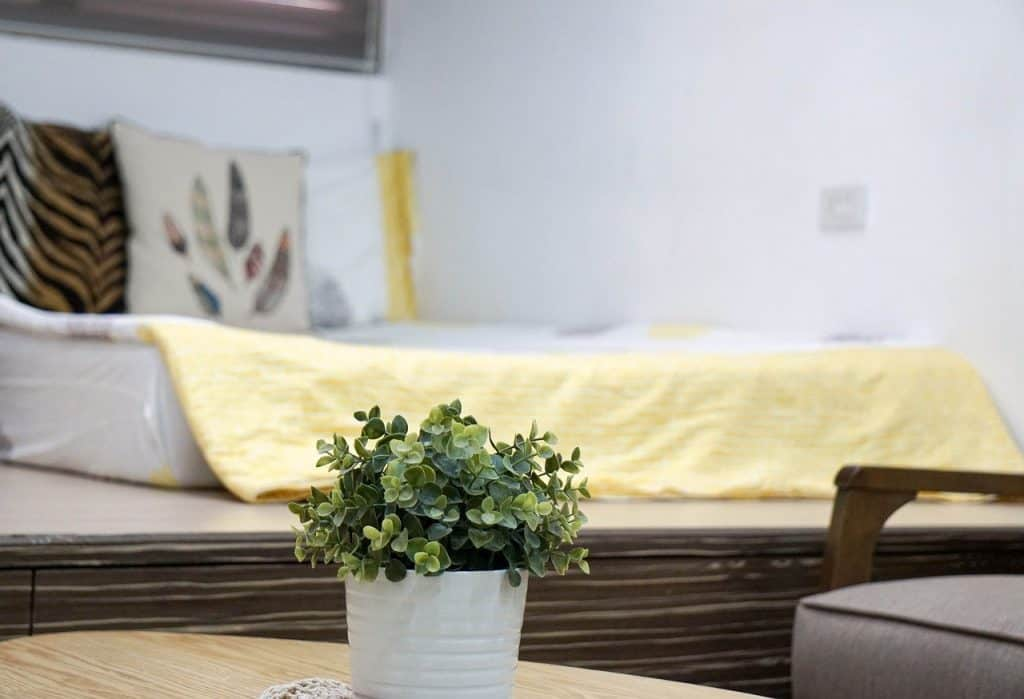 Is it harmful to have plants in your bedroom at night