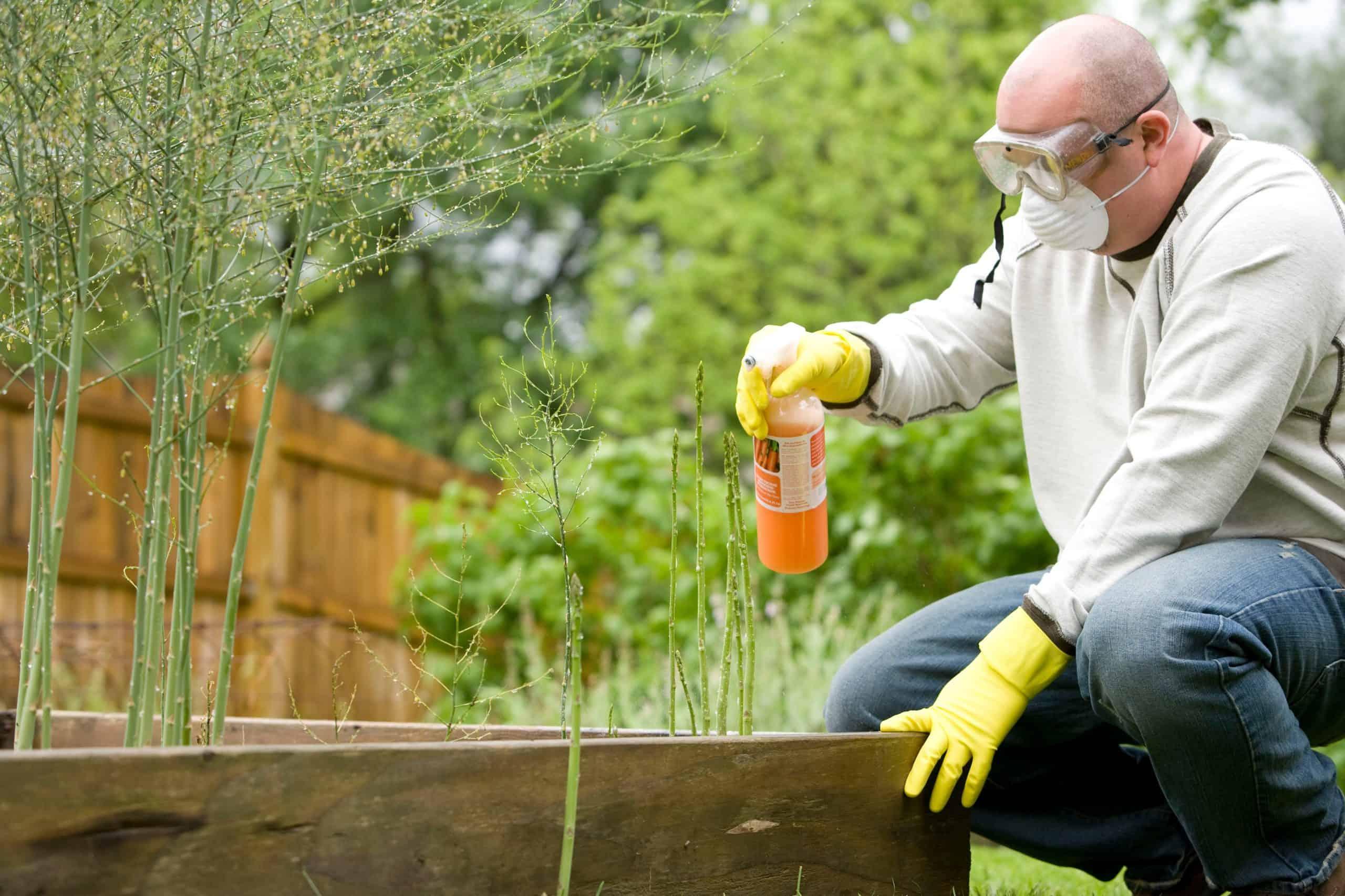 What is Lasagna gardening