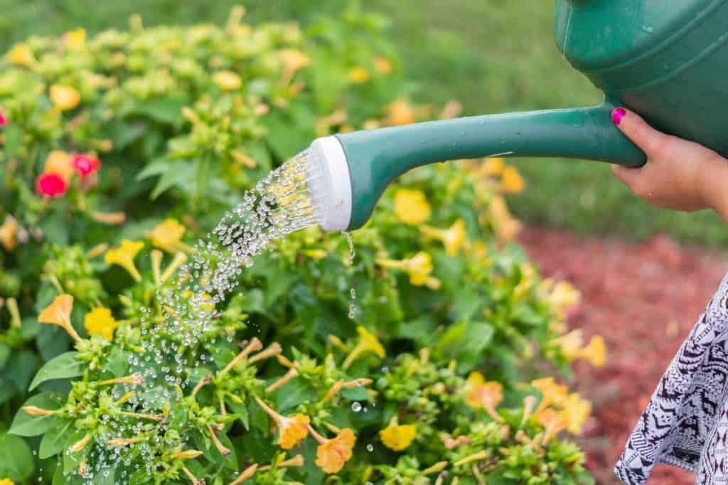 Watering garden can
