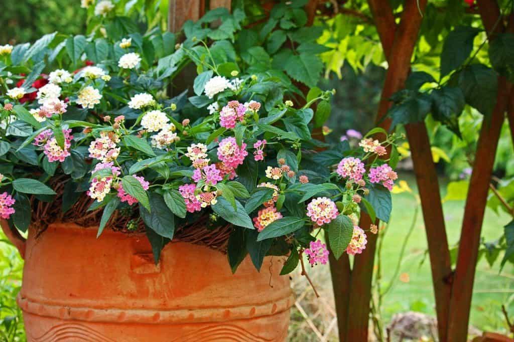 advantage of organic gardening