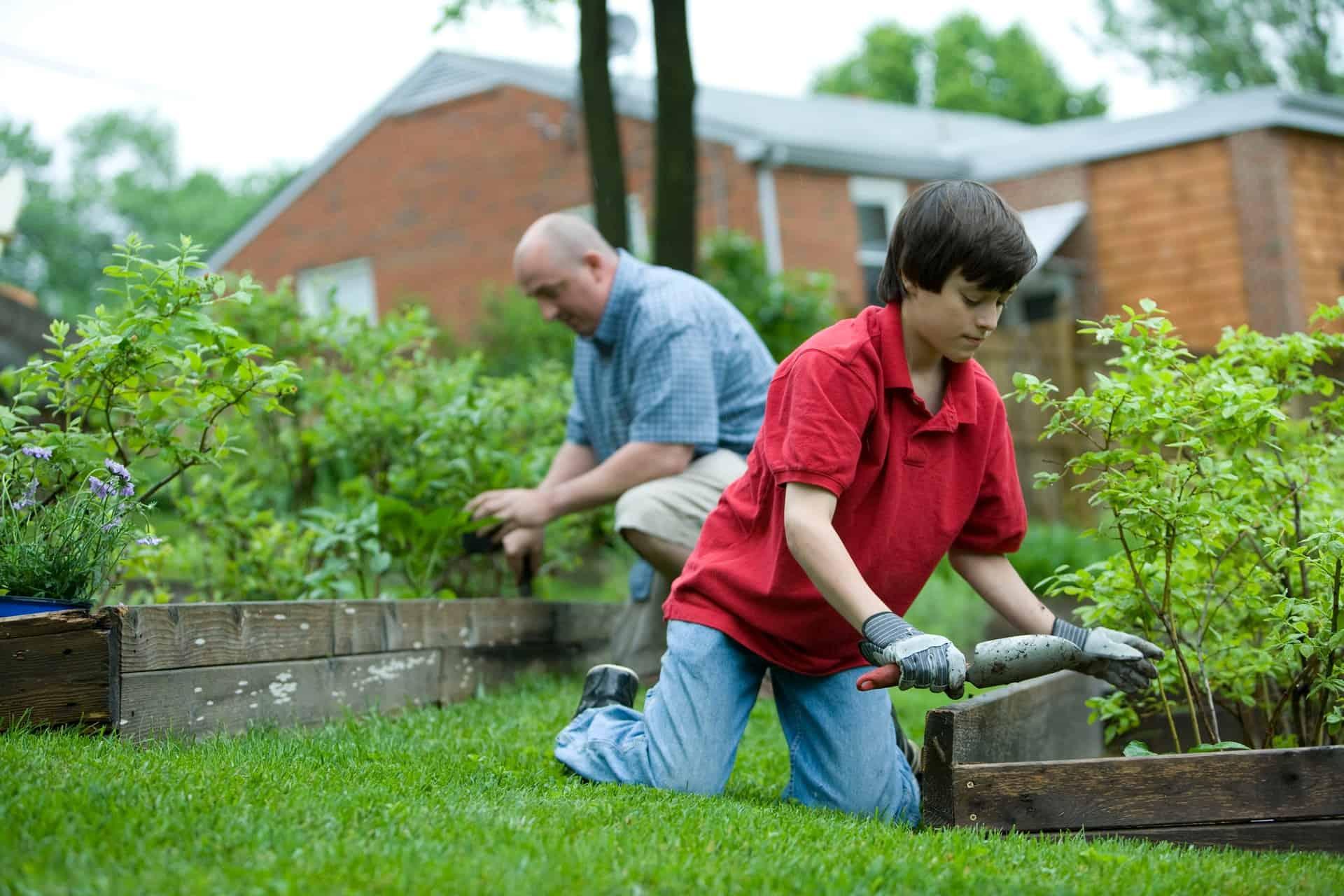 best organic gardening fertilizer