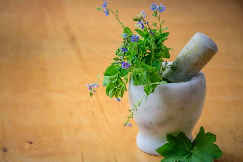 how to start an organic herb garden