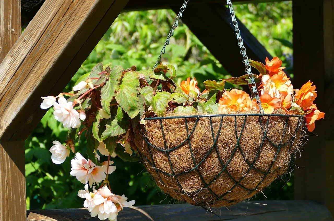 hanging baskets plants