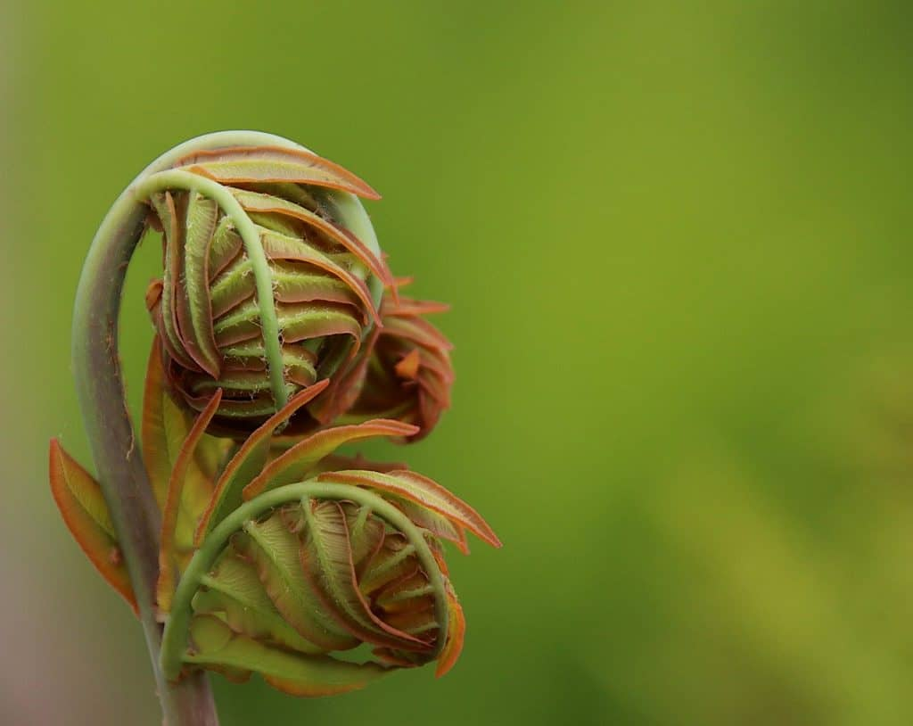 how to kill ferns in your garden