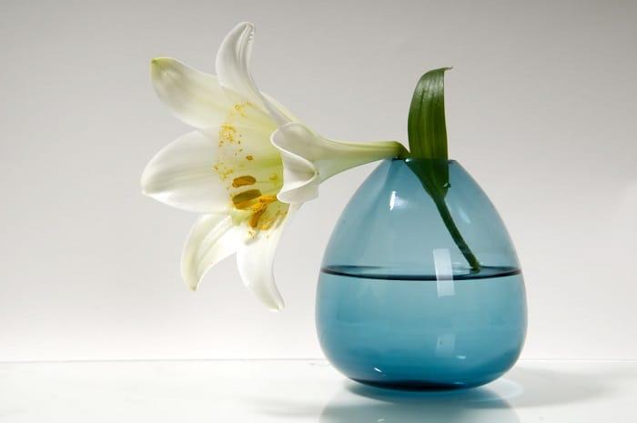 indoor plants that can grow in water