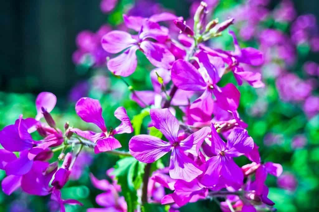 indoor plants that need little water begonia