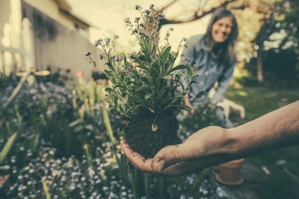 step by step guide to organic herb garden