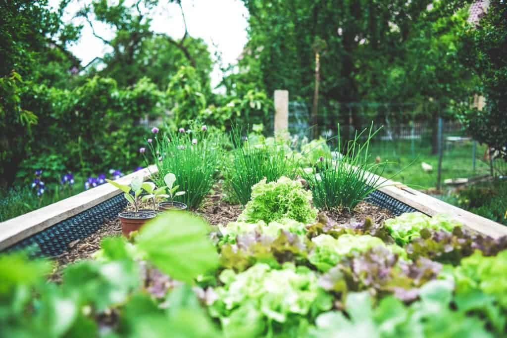 Urban Gardening 101: Tips, Benefits and History