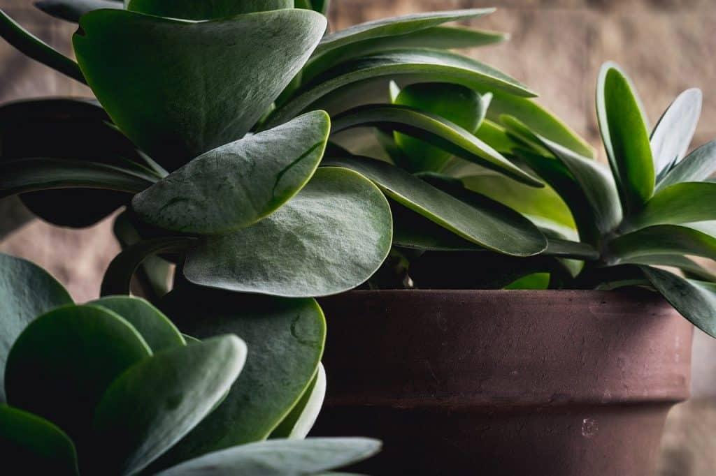 non flowering plants names