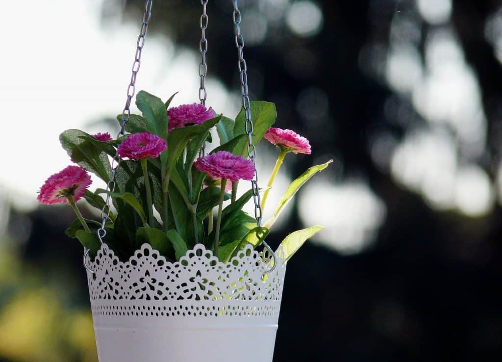 planting a hanging basket step by step