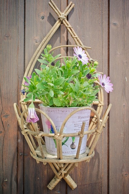 tips to grow plants in hanging baskets
