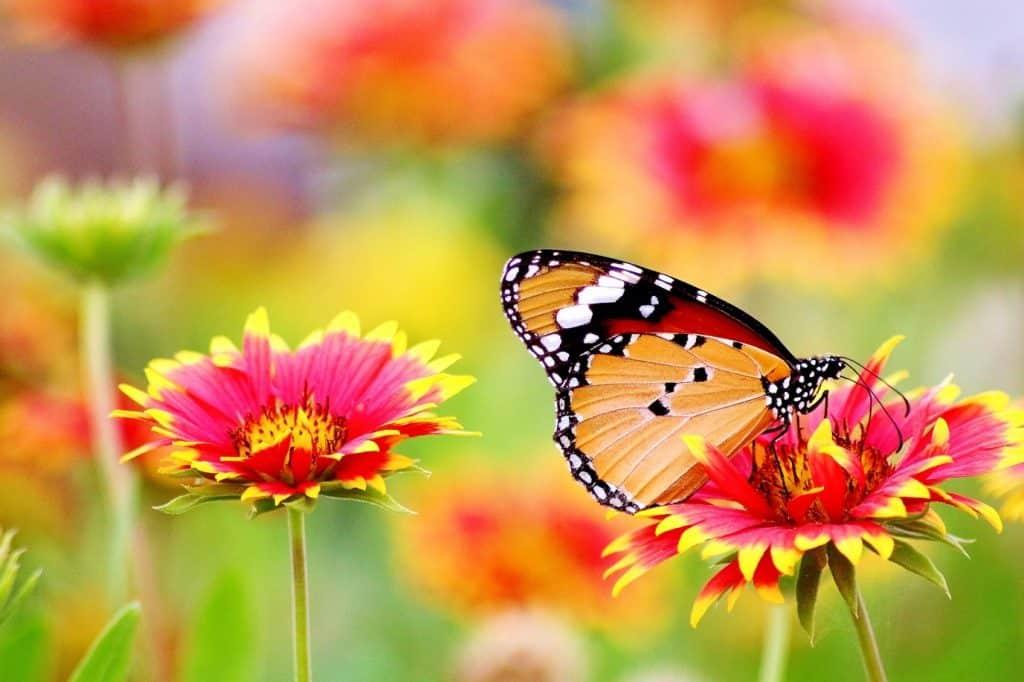 holistic gardening