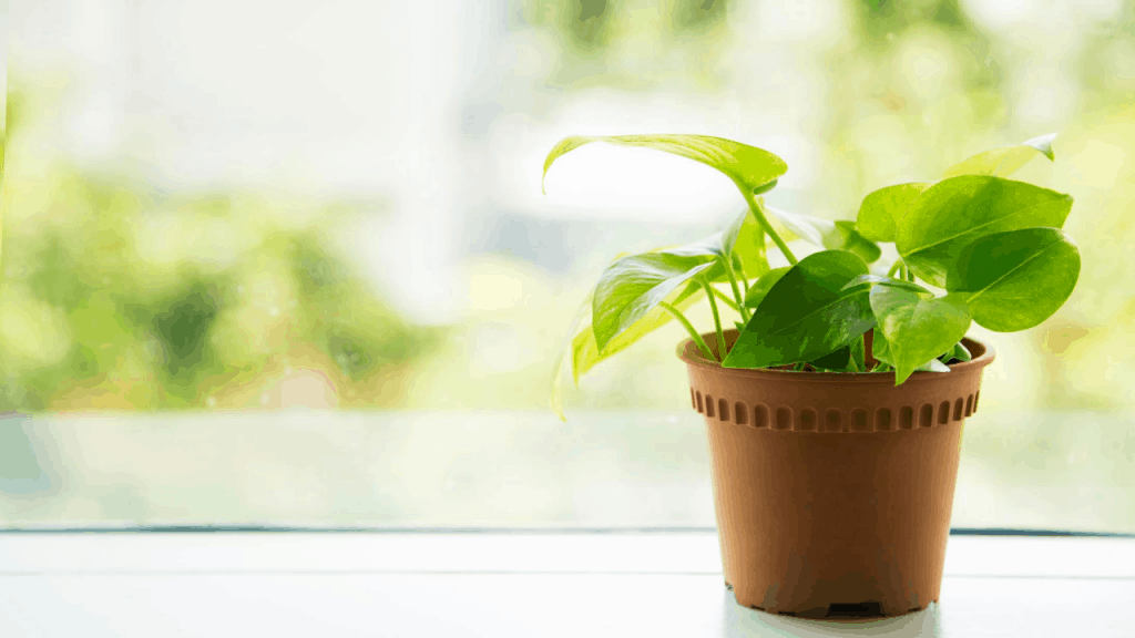 Best plants for office desk with no windows