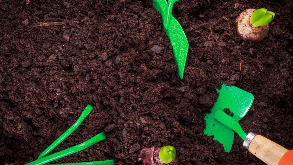 Best Soil For Growing Plants