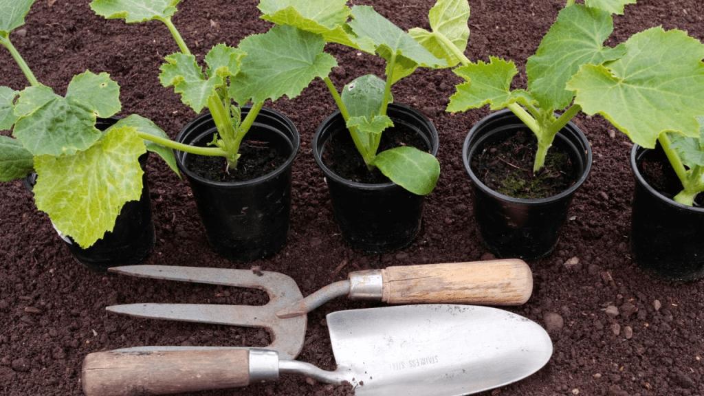 Best soil for Vegetable plants