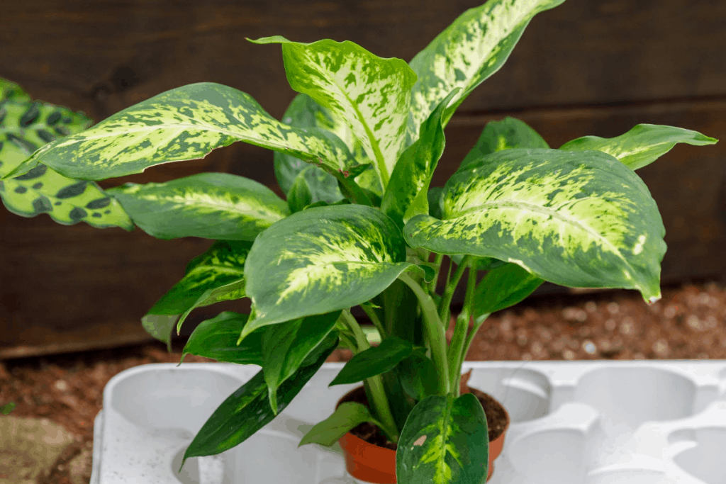 fastest growing house plants