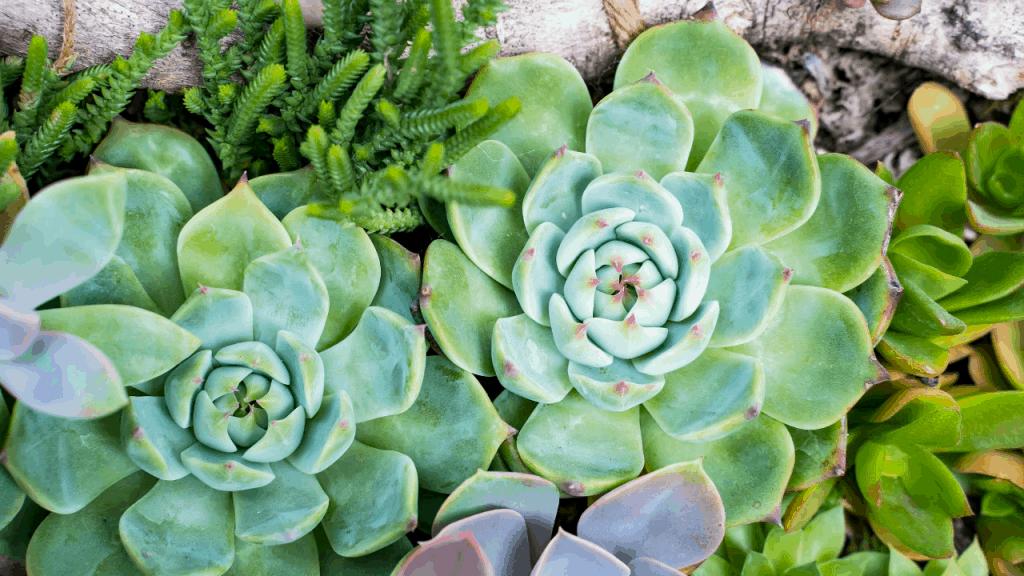 Do succulents grow bigger