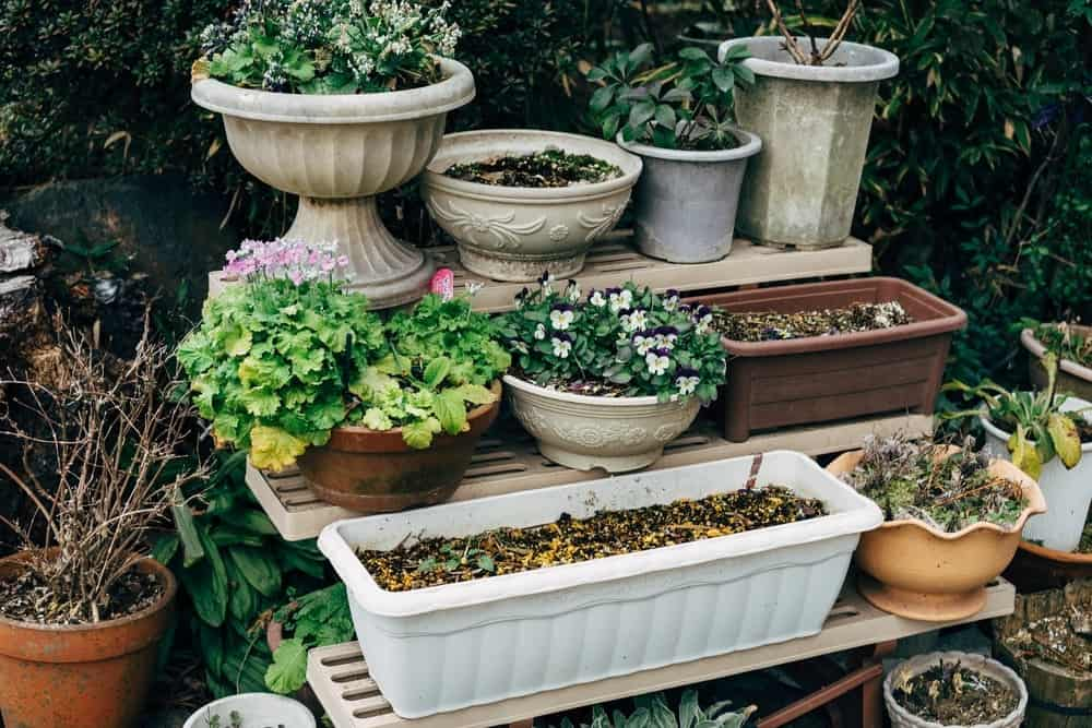The Right Containers for Home Gardening