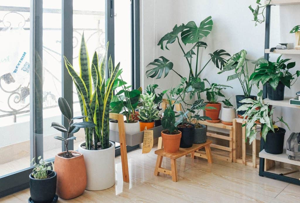 watering indoor plants while on vacation