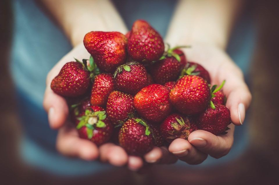 How to harvest Strawberry Plant