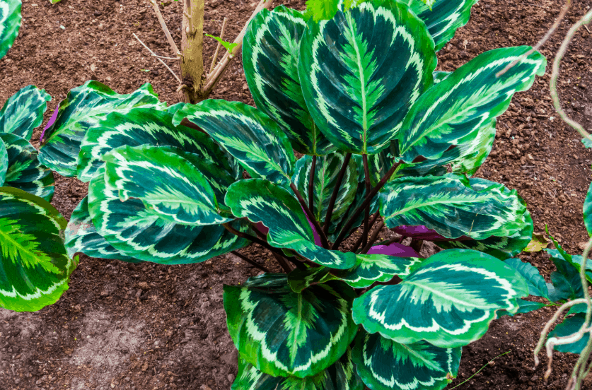 Colorful house plants