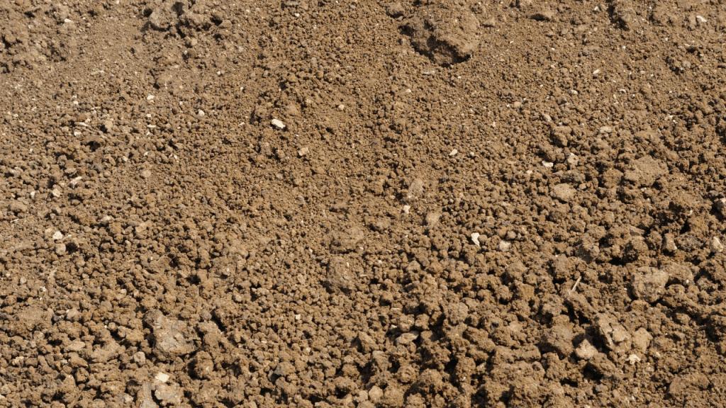 Silt Soil for plants