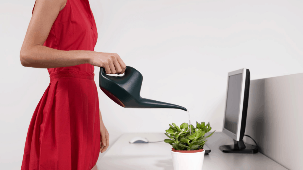 Small Plants for Office Desk