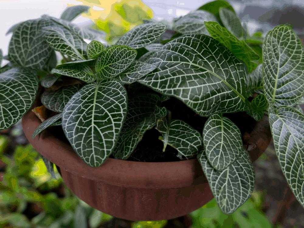 True low light houseplants