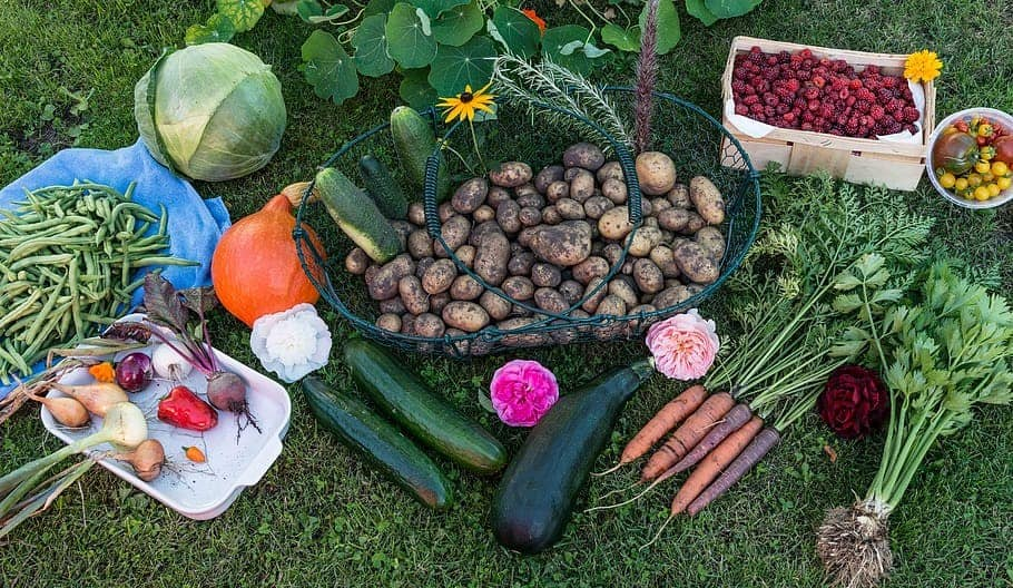 What Vegetables Grow Well Together In Containers